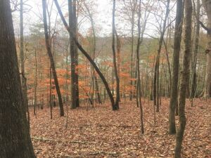 2 Norris Lake View Lots & 3 Building Lots