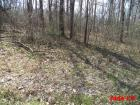 Norris Lake Land Auction, Jade LN, New Tazewell, TN