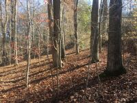 1.23 ac. lot on N. Shorewood Ln. in the Cove Norris, Sect. 2A subdivision - 3